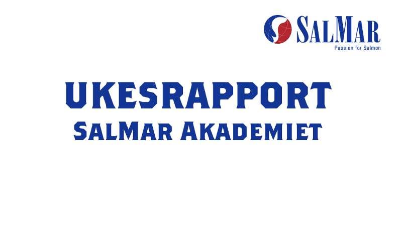 SalMar Akademiet - ukesrapport