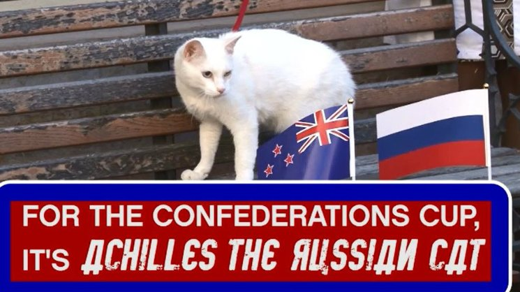 Achilles: the cat predicting matches at the Confederations Cup!