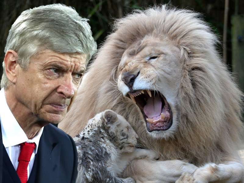 Wenger claims refs are protected 'like lions in the zoo' following Everton & Man City defeats