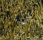 Prêmio Goal Brasil: os vencedores!
