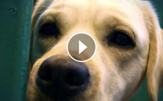 Hunde-Flitzer stürmt das Spielfeld