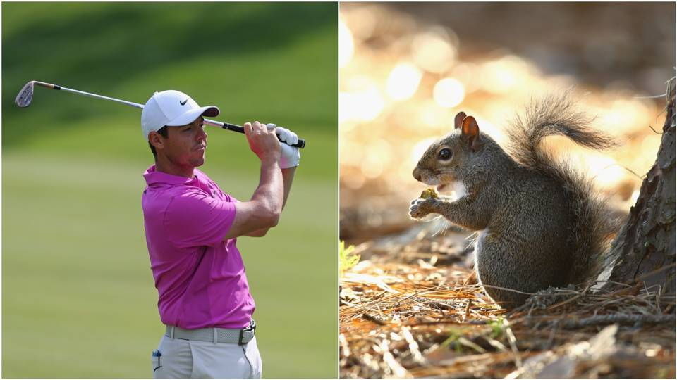 Travelers Championship: Course invader drives Rory McIlroy and crowd nuts