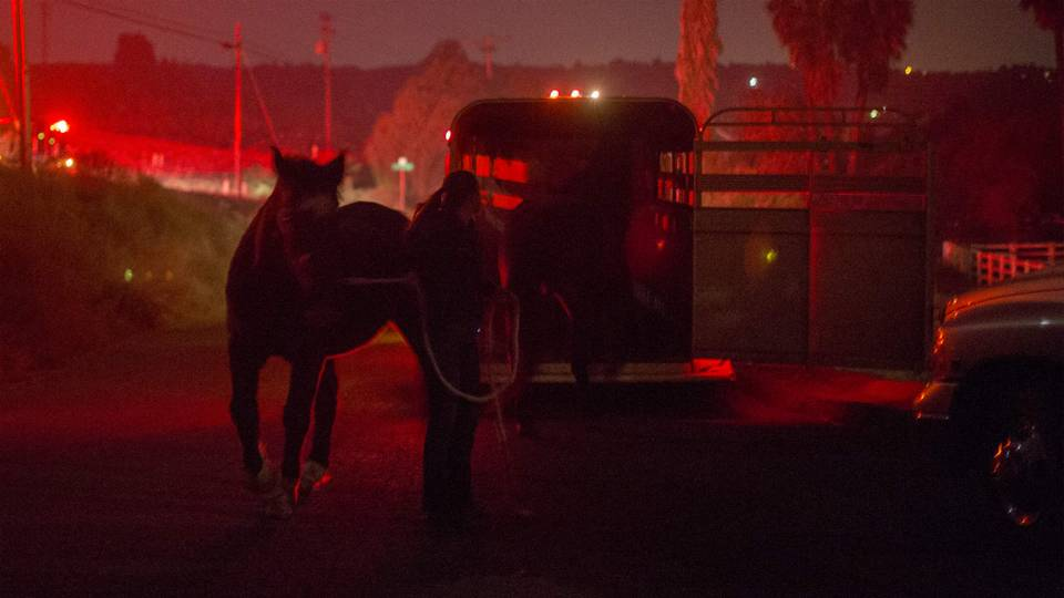 wildfire-horse-12082017-us-news-getty-ftr