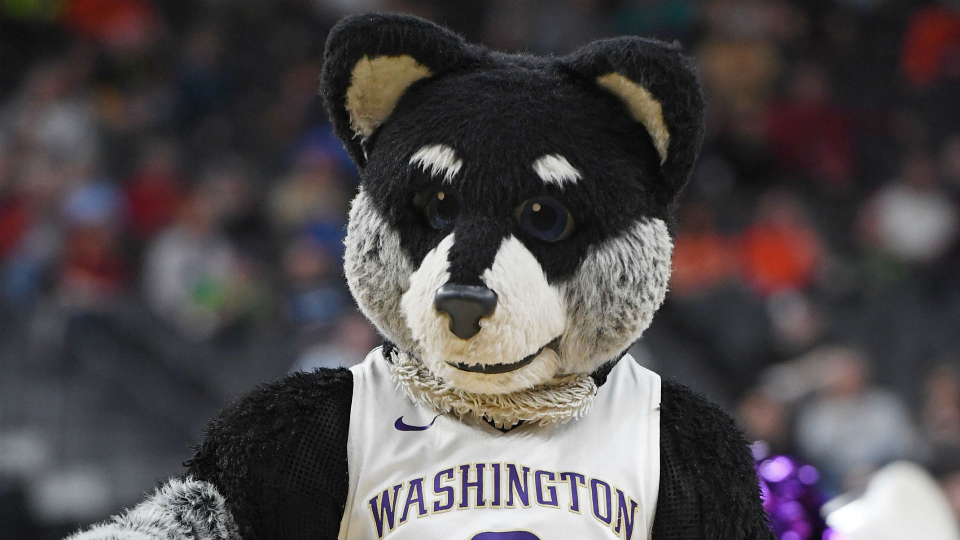 UW basketball team OK after team bus catches fire after loss to Auburn