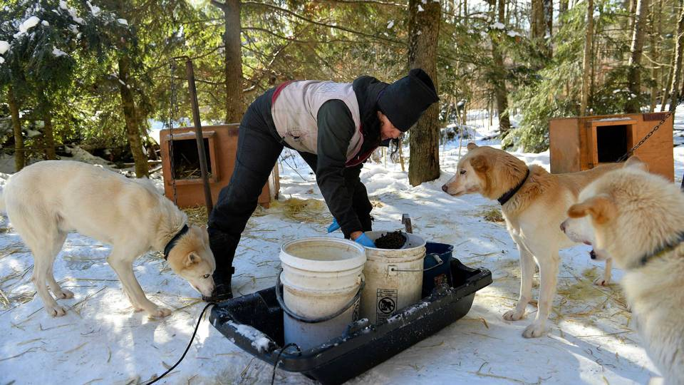 Iditarod clears four-time champ of dog-doping (yes, dog-doping)