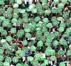 Chape net first goal since tragedy