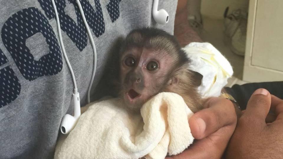 dez-bryant-monkey-11215-usnews-instagram-FTR