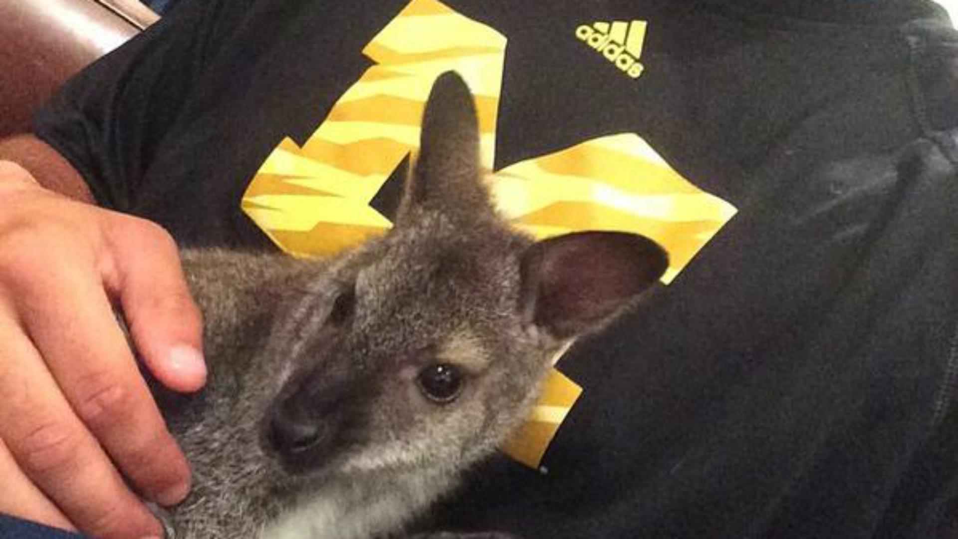 wallaby-7315-us-news-twitter-FTR