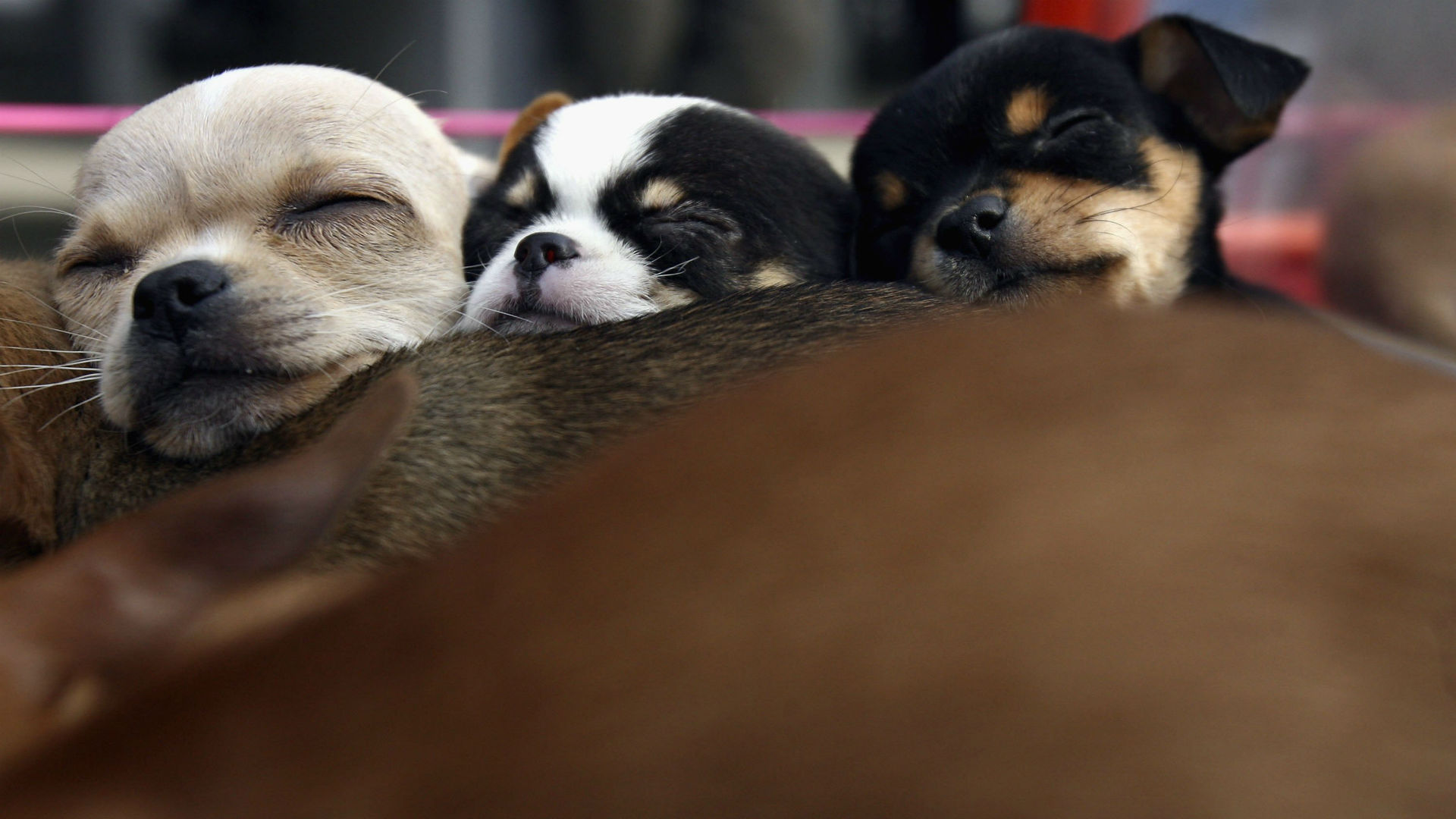 puppies-22916-usnews-getty-FTR