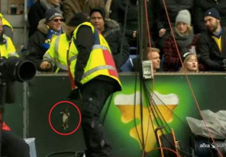 Rats hurled at Copenhagen players