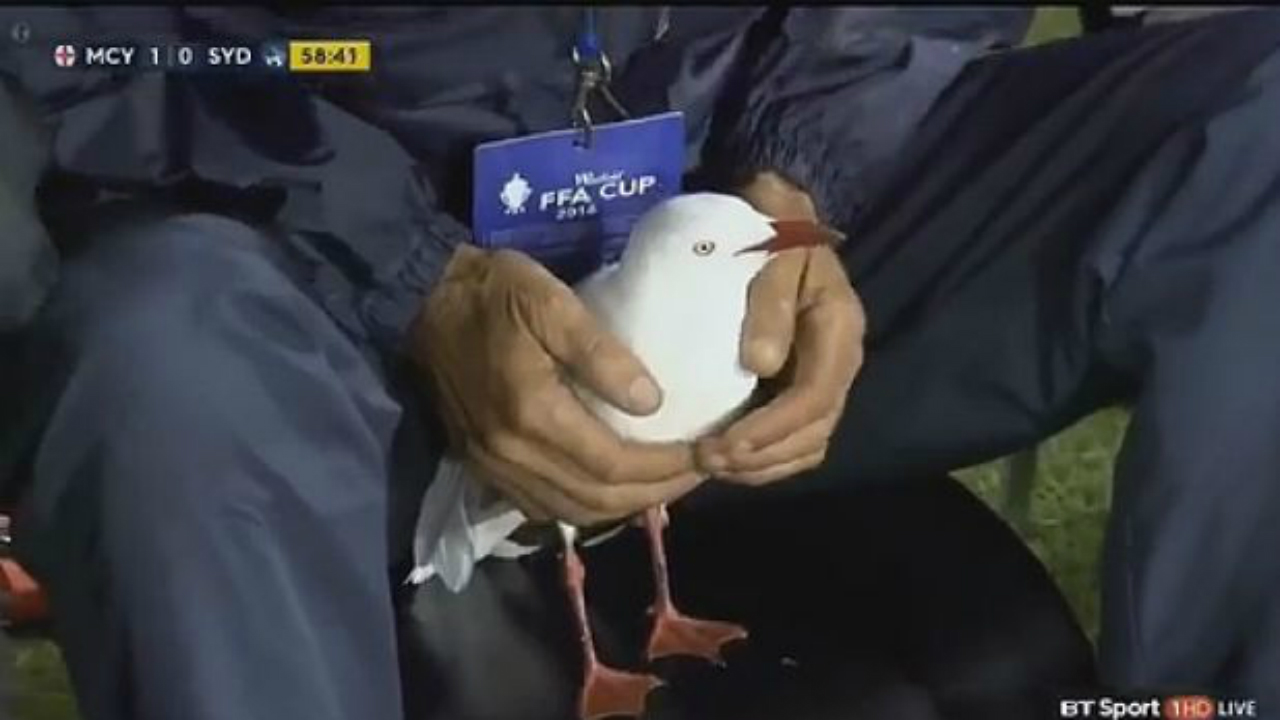 Cup final stopped to help injured seagull off pitch