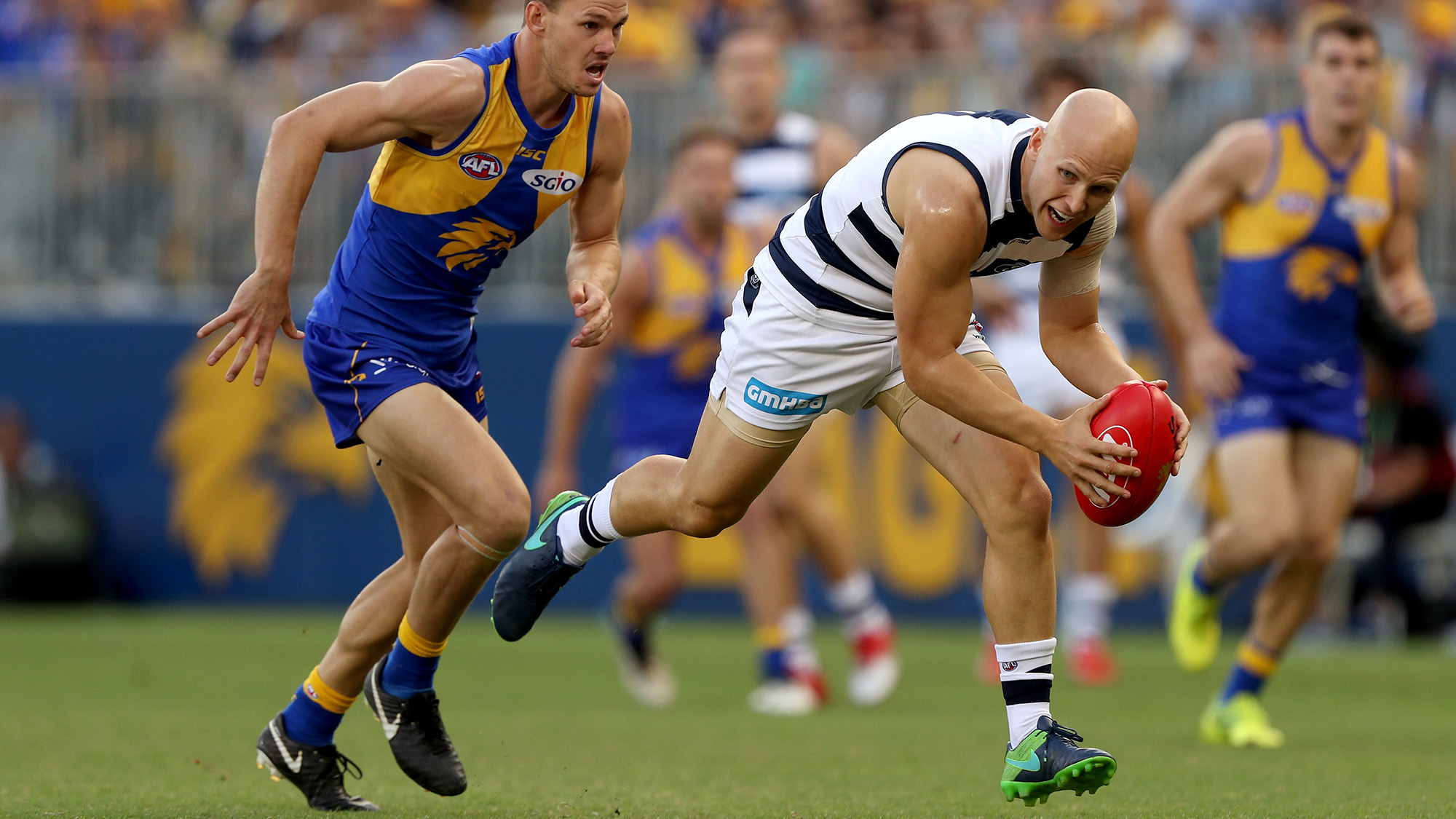 Wild fight at Port Adelaide-Geelong match at Adelaide Oval