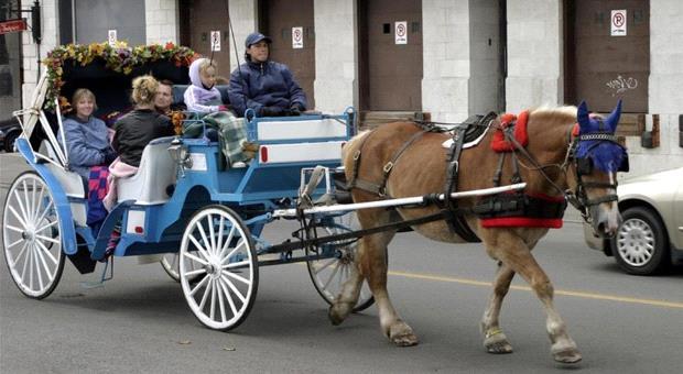 horse_cart.jpg