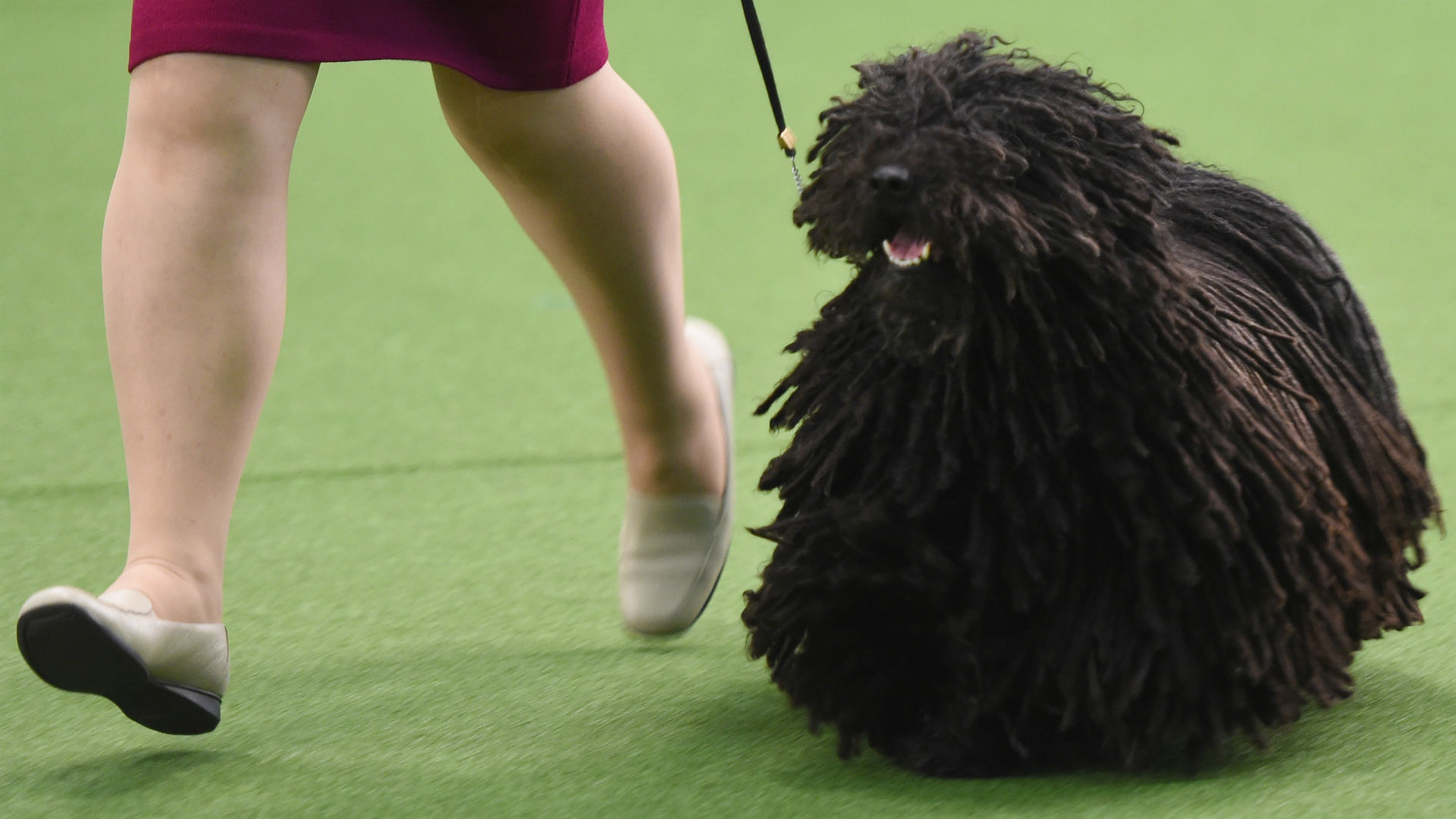 Dog 6.jpg