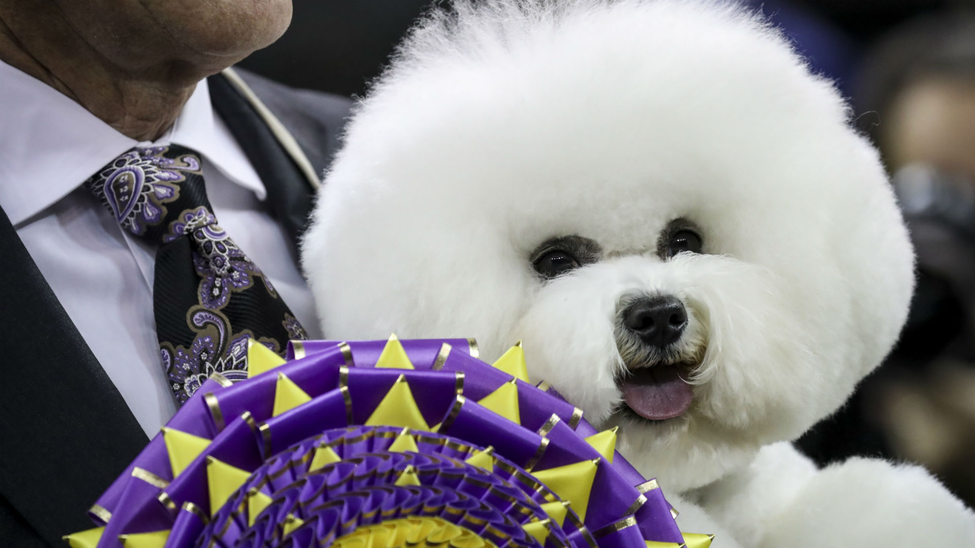 Chinese canines put their best paws forward at Westminster Dog Show