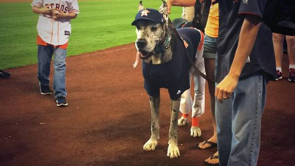 houston-astros-dog-042714-twitter-ftr