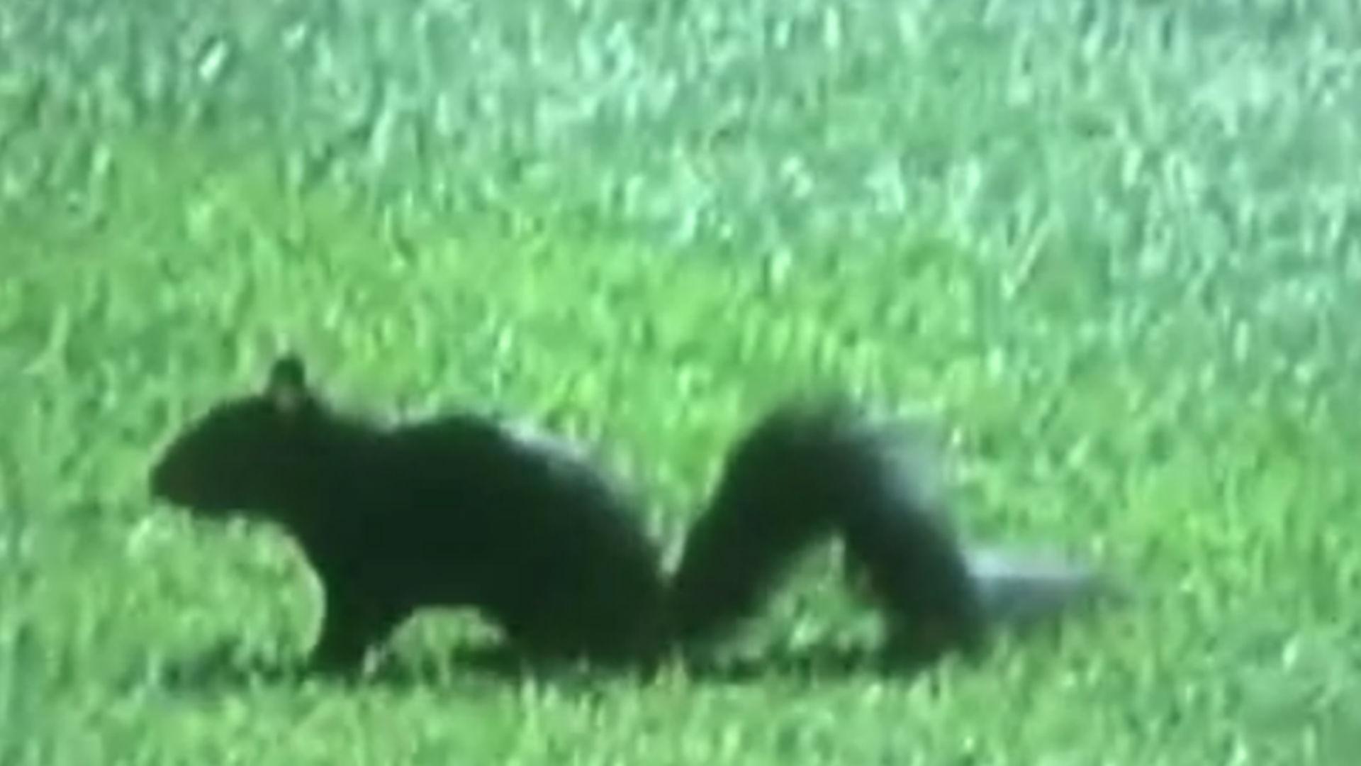 squirrel-tigers-ftr-twitter-080615