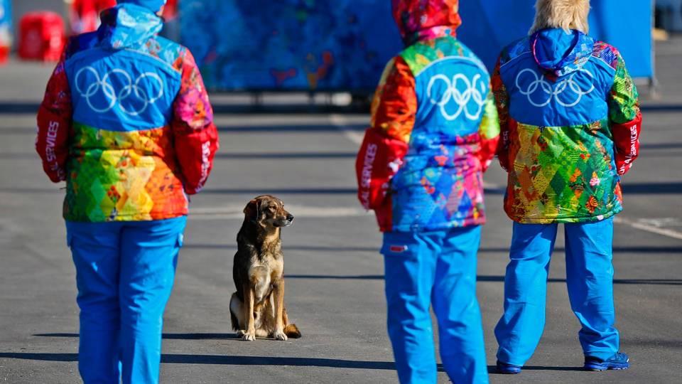 OLY-dogs1-020614-AP-FTR.jpg