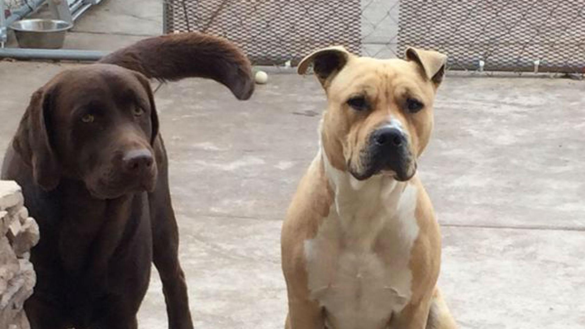 kenny-stills-dogs-051915-ftr-twitter.jpg