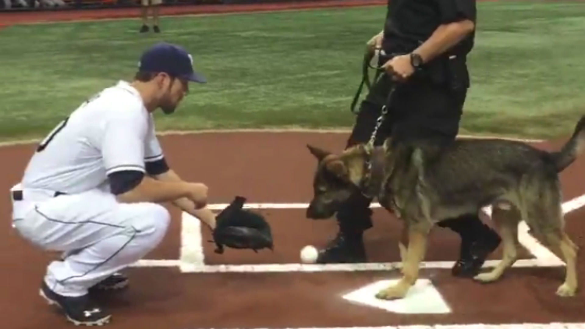 K-9 dog 'throws' first pitch at Rays game