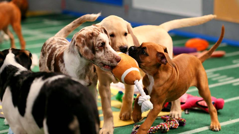 Image result for the puppy bowl