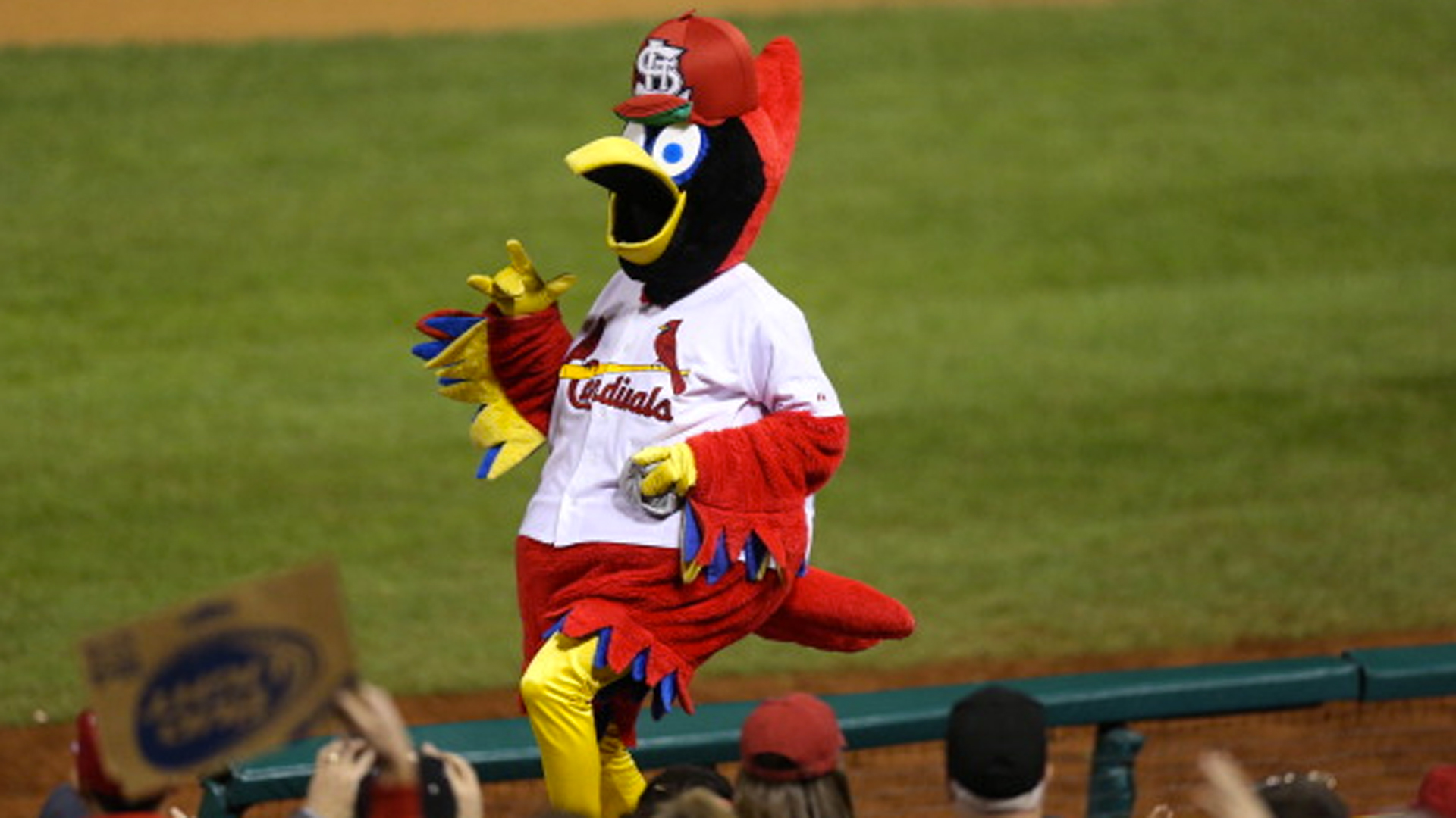 Cardinals 'Fredbird' mascot scrutinized for controversial photo