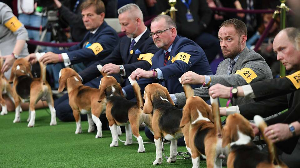 Westminster Dog Show Best In Breed Winners