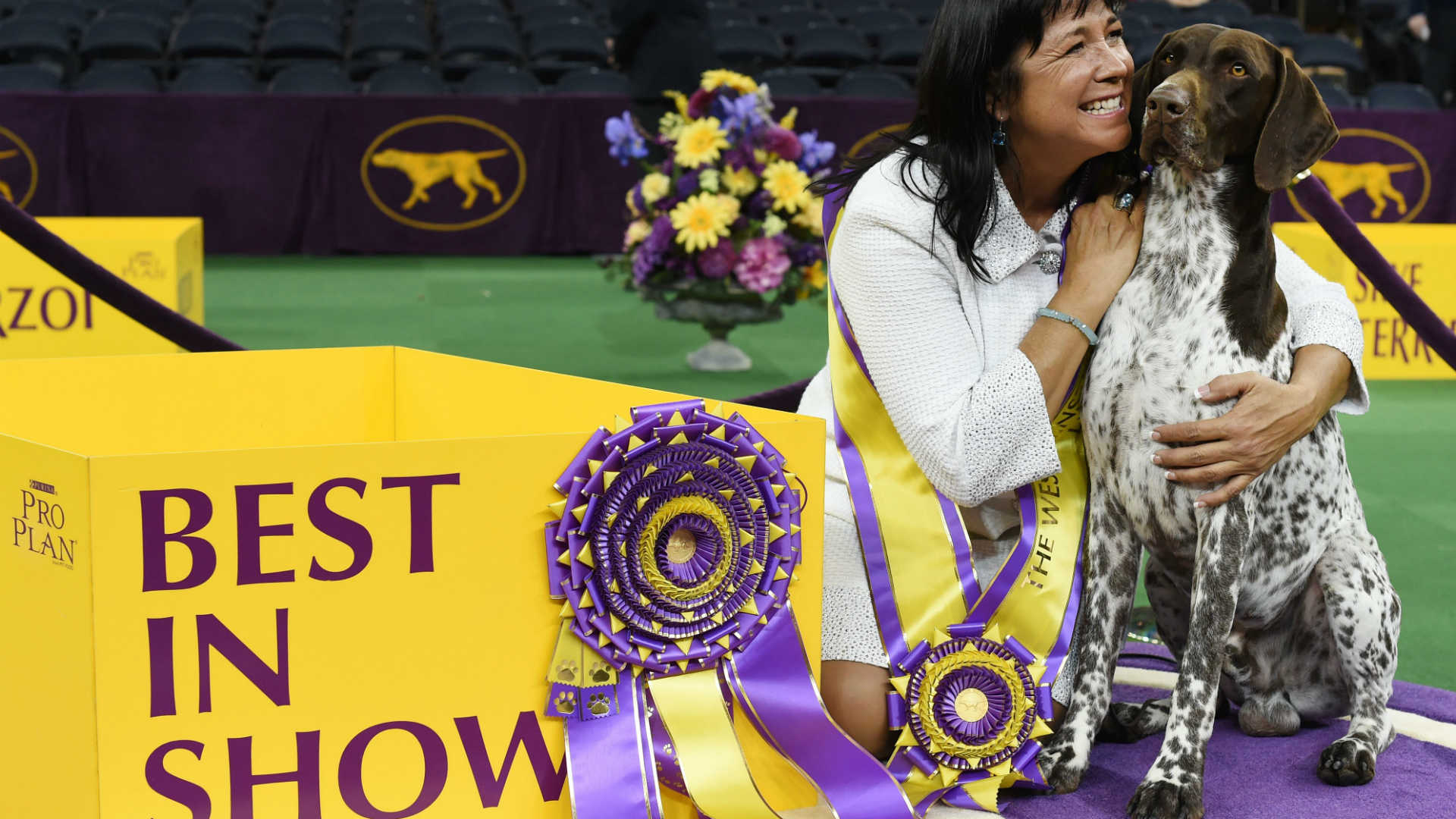 when is westminster dog show 2016
