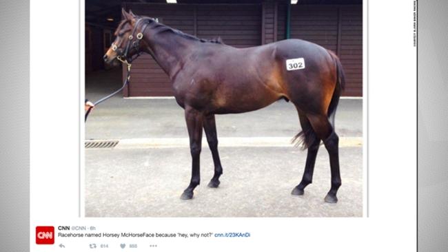 Horsey McHorseFace-041516-TWITTER-FTR.jpg