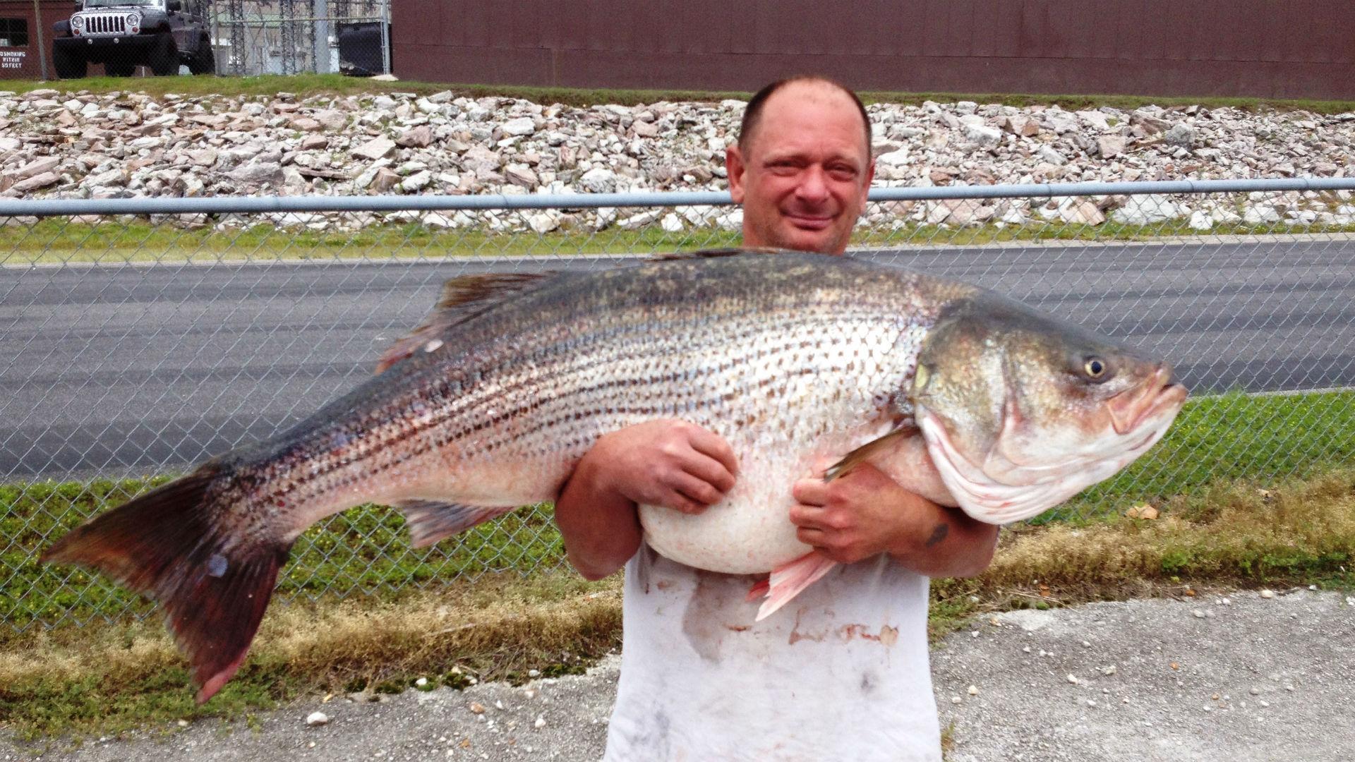 65-pound-striped-bass-record-052915-ftr.jpg