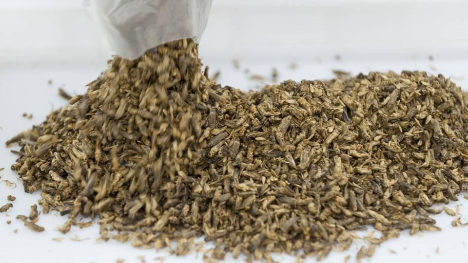 Crickets FTR.jpg