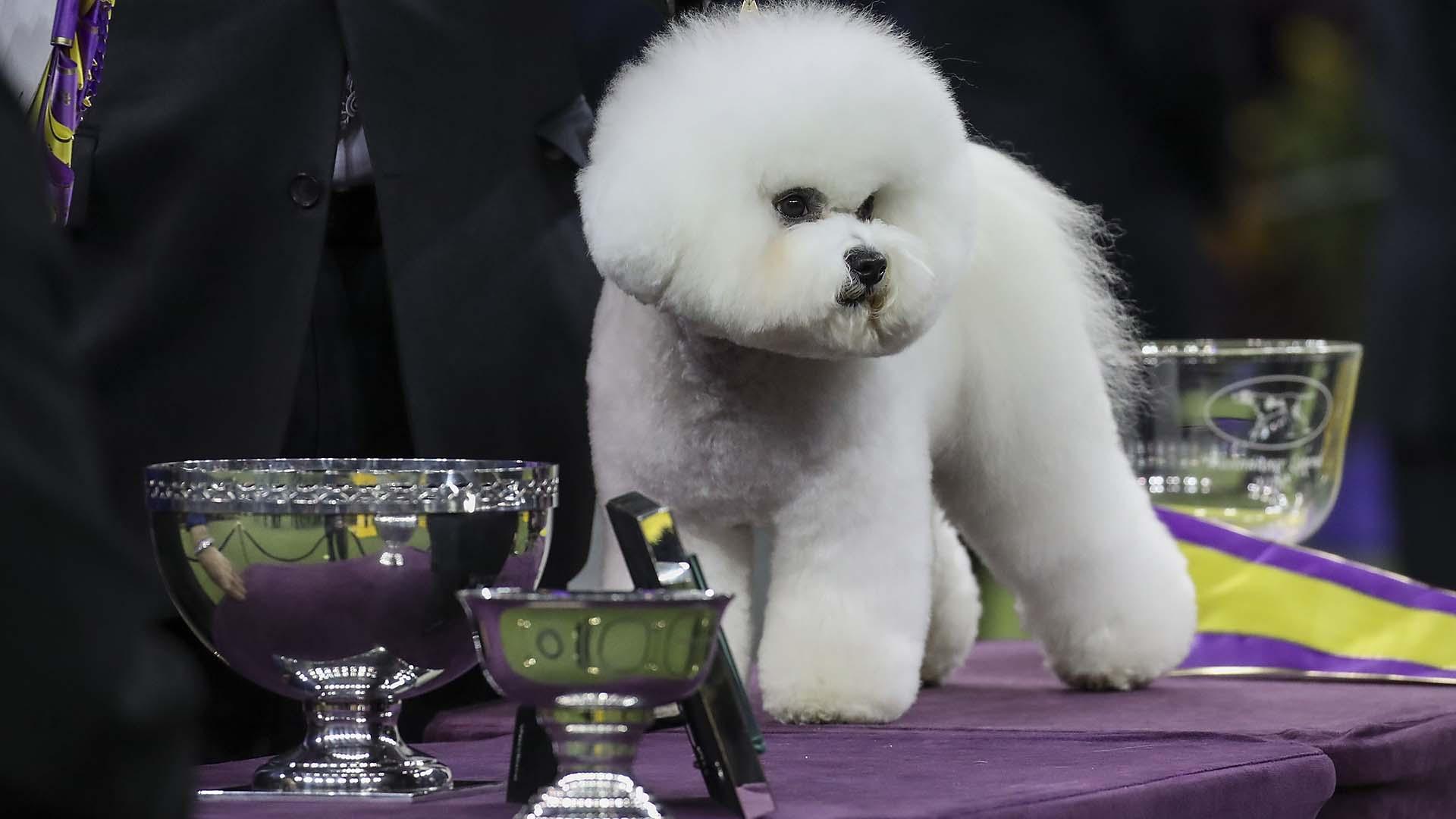 Photos 2018 westminster dog show sporting news for Pool show 2018