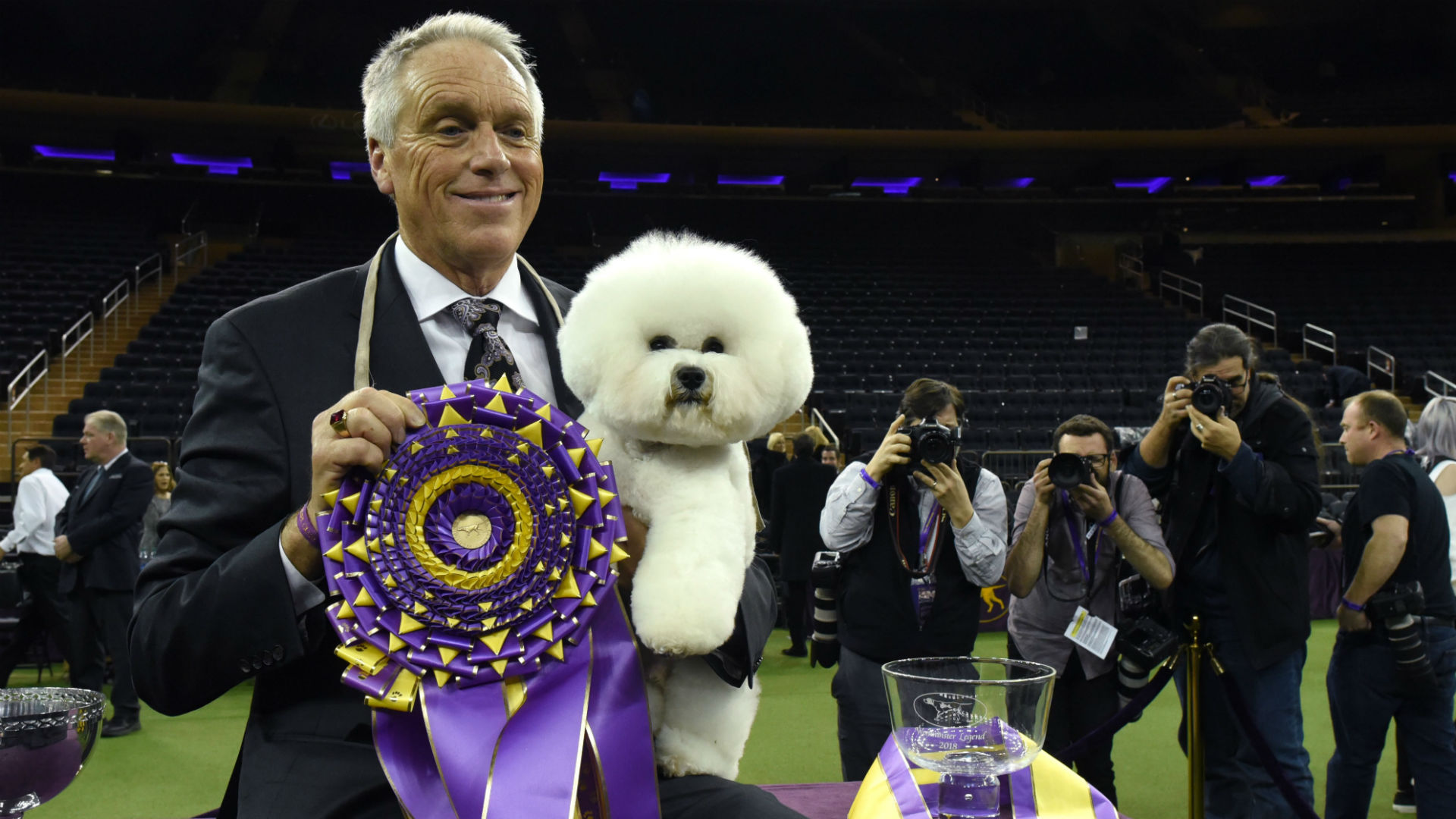 Wire fox terrier called King wins Westminster best in show