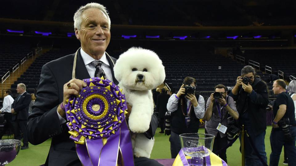 Westminster-Dog-Show-020419-Getty-FTR