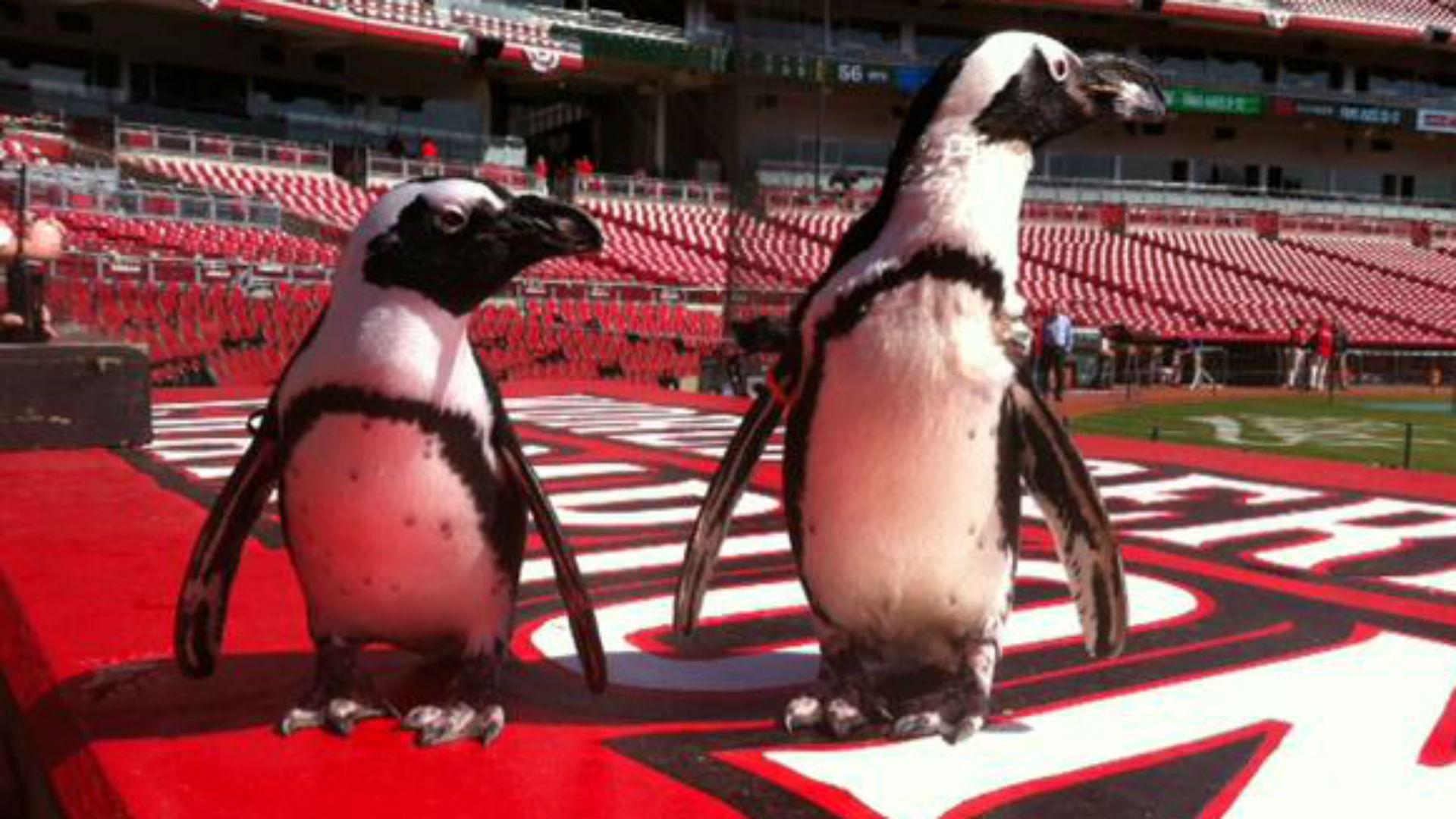 paula-penguin-041215-ftr-twitter.jpg