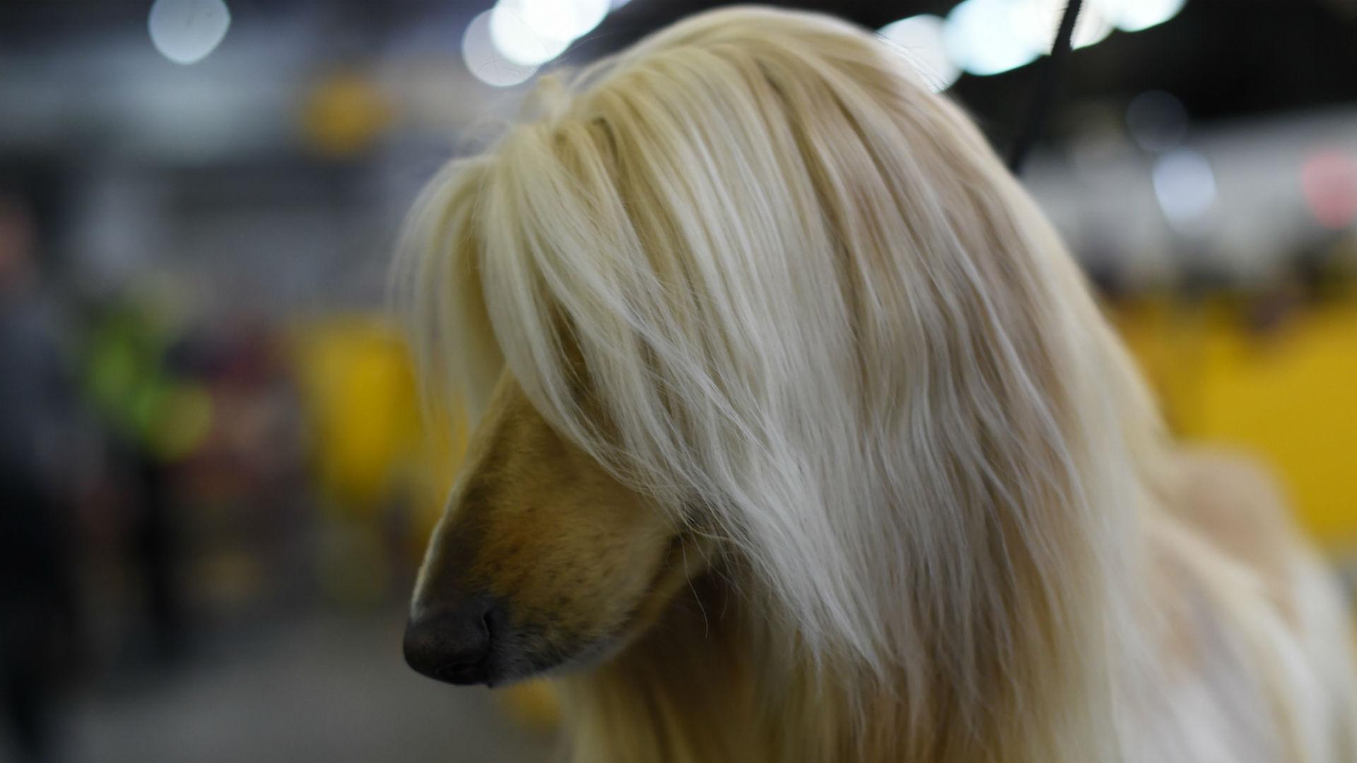 Dog 7.jpg
