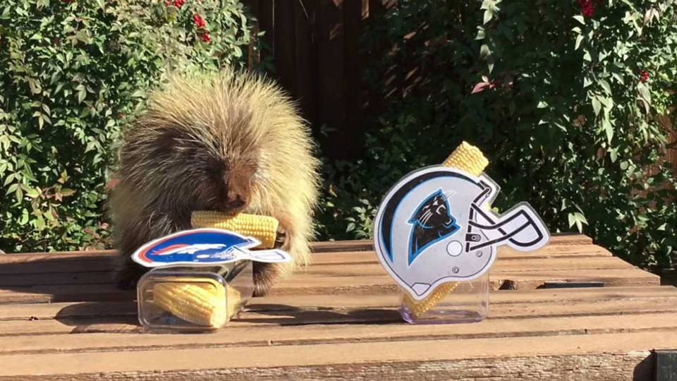 Porcupine Super Bowl - FTR