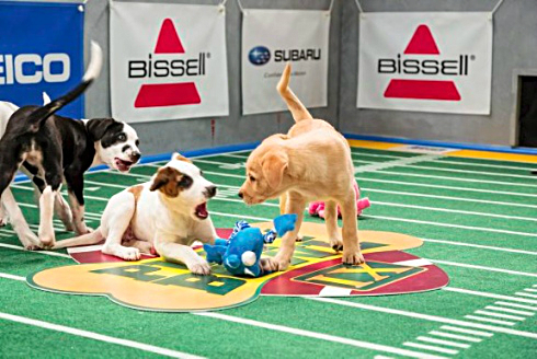 Puppy-Bowl-FTR-012014-AP