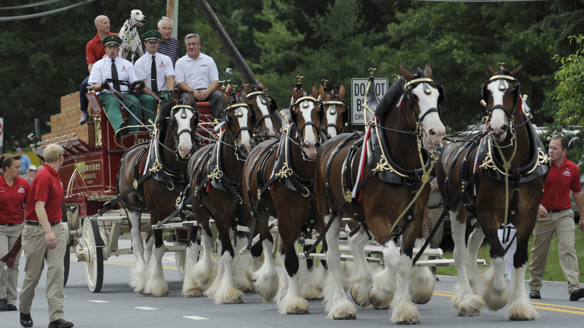 Budweiser clydesdales christmas wallpaper
