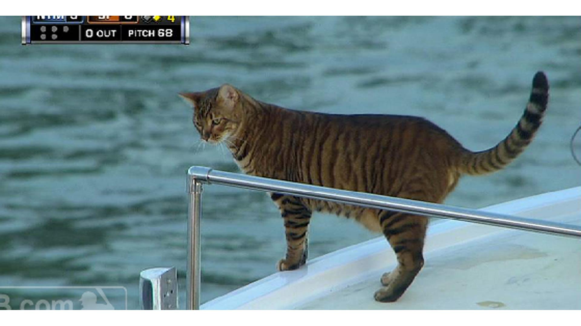 cats-baseball-mccovey-cover-06-814-youtube-ftr