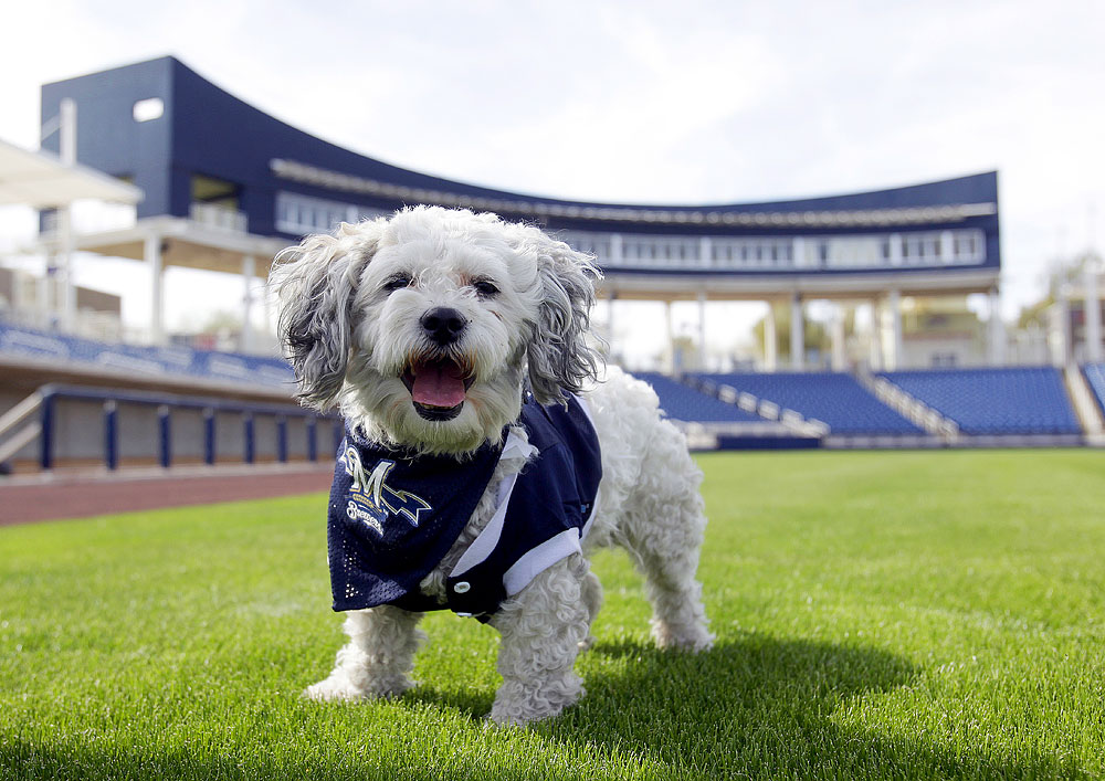 Hank the Brewers dog
