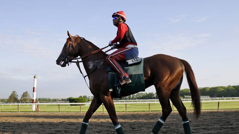 California-Chrome-5-21-2014-AP-FTR