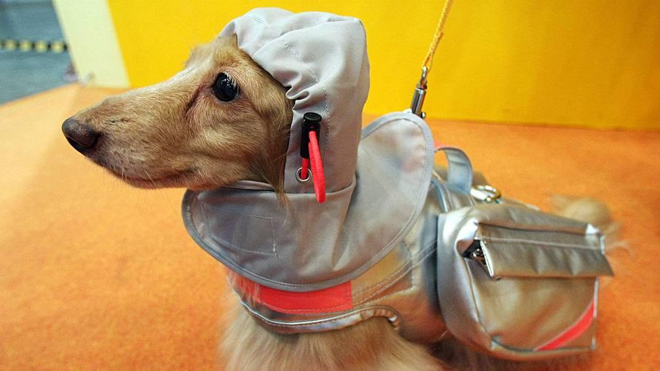 Dog-FTR-GEtty.jpg