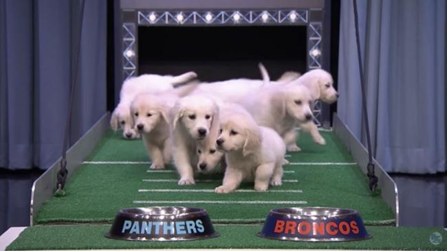 jimmy-fallon-puppies-super-bowl-50-ftr.jpg
