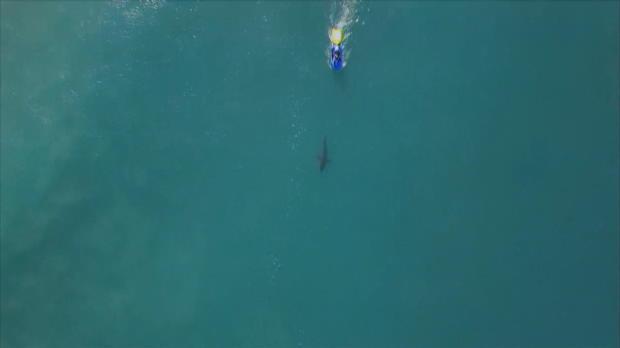 Surfen: Hai-Deja-Vu für Fanning