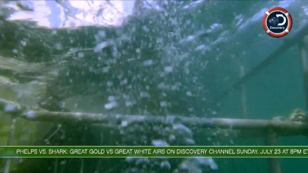 لقطة: سباحة: فيلبس يقوم بالغطس الى جانب أسماك القرش