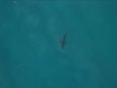 لقطة: ركمجة: فانينغ يغادر المياه على وجه السرعة.. والسببُ واضحٌ للعيان