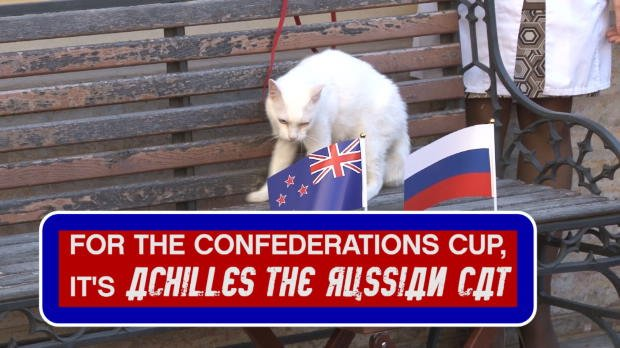Cat predicts opening Confederations Cup game