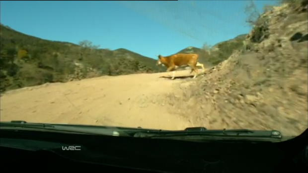 Video - VIRAL : Mexique : Hirvonen, la vache !