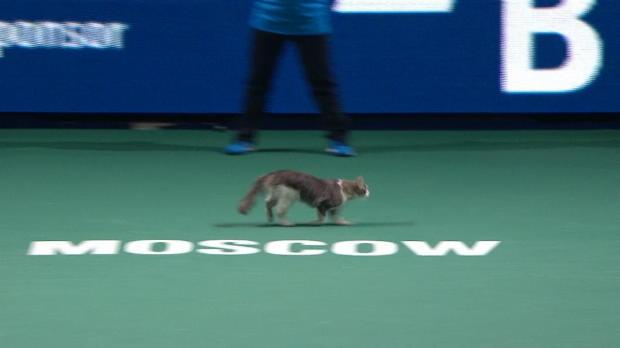 Basket : Moscou - Un chat traverse le court pendant le match de Stephens